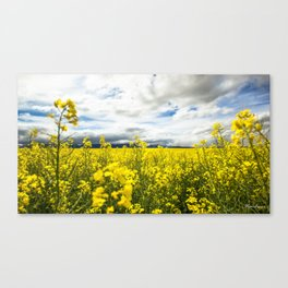 Fields of yellow - Floral Photography #Society6 Canvas Print