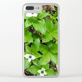 Canadian bunchberry Clear iPhone Case