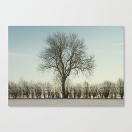 Winter tree in the low sun Canvas Print