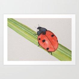 Ladybird on a blade of grass Art Print