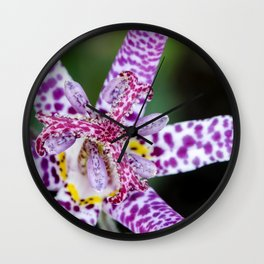 Toad Lily Center Perspective Wall Clock