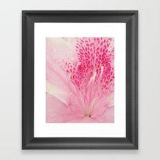 Pink Azalea Framed Art Print