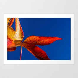 Fall Colors, Red and Yellow Foliage Against Sky Nature / Botanical Photograph Art Print