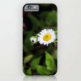 Daisy in the Forest iPhone Case