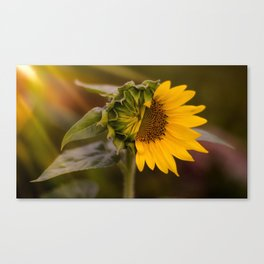 Reveal Yourself Canvas Print