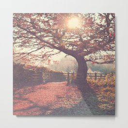 Sunlight shines through silhouetted tree. Metal Print