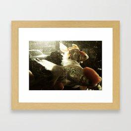 金鱼三 Framed Art Print