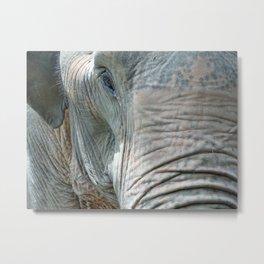 old elephant eye Metal Print