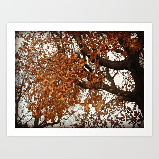 Colors Thriving As The Leaves Are Dying Art Print