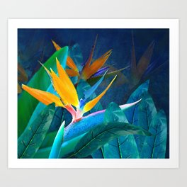 Bird of Paradise Under a Hawaiian Moon Art Print