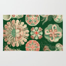 Ernst Haeckel Discomedusae Jellyfish Rug