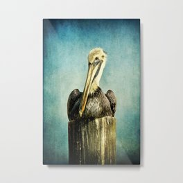 Brown Pelican Art Metal Print