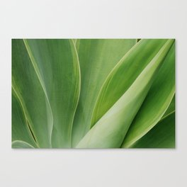 Maui Green Canvas Print