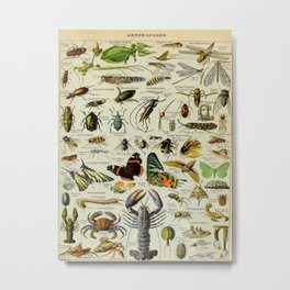 Arthropod Vintage Scientific Illustration French Language Encyclopedia Lithographs Educational Metal Print