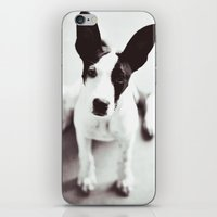 coco iPhone & iPod Skins featuring Coco by Beverly LeFevre