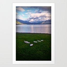 Swans By Lake Annecy Art Print