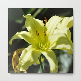 Purrty White Flower Metal Print