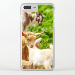 Baby Goats Playing Clear iPhone Case