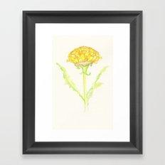Yellow Dandelion  Framed Art Print