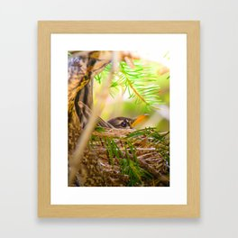 Baby Robin Bird Framed Art Print