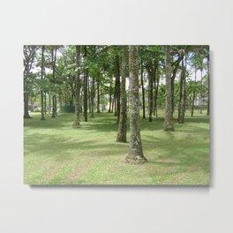 Native trees near the sea Metal Print