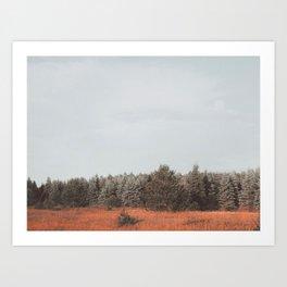 Northern Michigan Trees Art Print