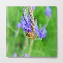 Bee on a Blue Verbena Hastata Metal Print