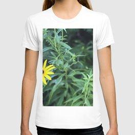 Black Eyed Susan. T-shirt