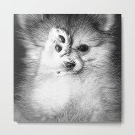 Vogue Pomeranian Metal Print