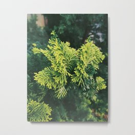 Plantae IV Metal Print