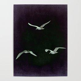 3 seagulls purple Poster