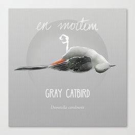 Gray Catbird in Death Canvas Print