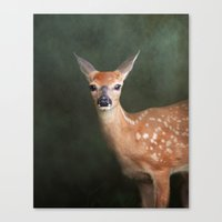 fawn Canvas Prints featuring Fawn by Jai Johnson