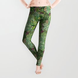 Watercolour Succulents Leggings
