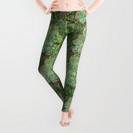 Watercolour Succulents Leggings