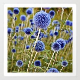 BLUE WILD THISTLE Art Print