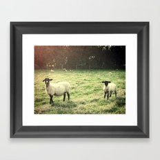 Dedicated Followers Framed Art Print