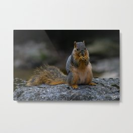 Perched Squirrel Eating a Nut Metal Print