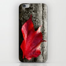 fall leaf iPhone & iPod Skin