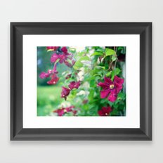 purple clematis flower Framed Art Print