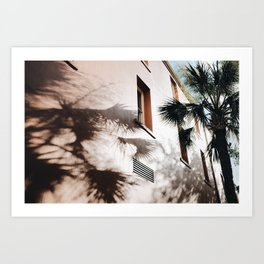 Palm Shadows Art Print