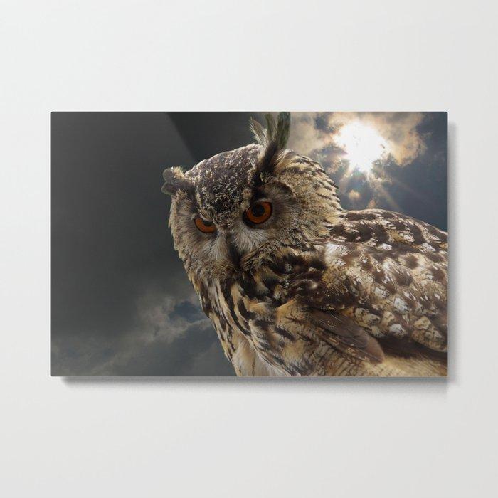 Stunning Owl Photography Metal Print