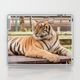 Post Playtime Rest, Indo-china Tiger Laptop & iPad Skin
