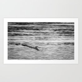 A Great Blue Heron Flying Over Cool Water Ripples Art Print