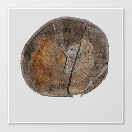 Stump 14 Canvas Print