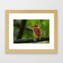 Ruddy Kingfisher Framed Art Print