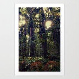 Sunrays in the Redwoods Art Print