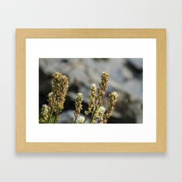 Small Life Framed Art Print