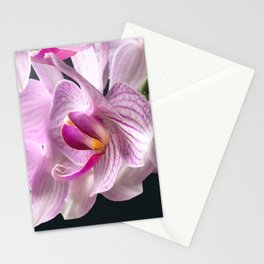 White and Pink Orchid close up Stationery Cards