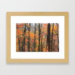 Autumn Woods Framed Art Print